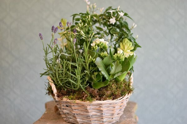 Container of Seasonal Plants