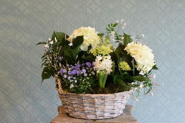 Container of Seasonal Plants hydrangea, hyacinth, jasmine, campanula
