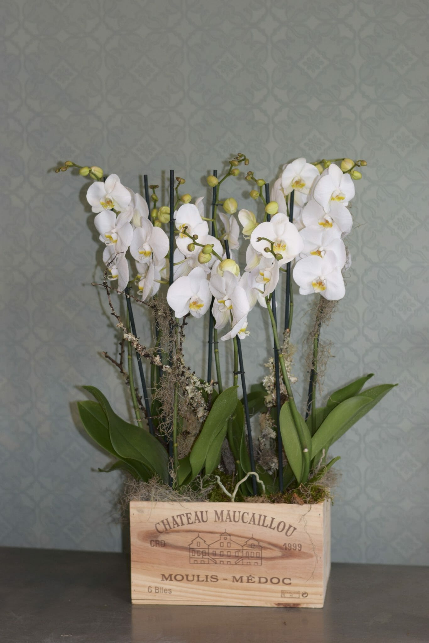 Kensington flowers florists same day london flower delivery orchids in a wine box izmirmasajfo