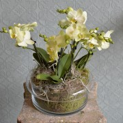 Mini Orchids in a Glass Bowl