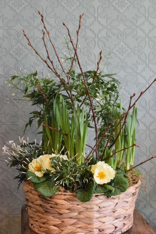Planted basket of mixed spring seasonal plants and bulbs, available to order from Kensington Flowers London