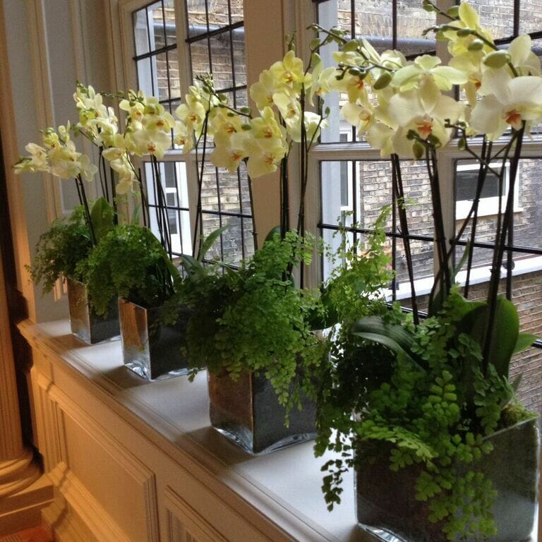 Photo showing an Orchid-plant-display-in-home, window ledge