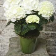 Seasonal Plant in Pot