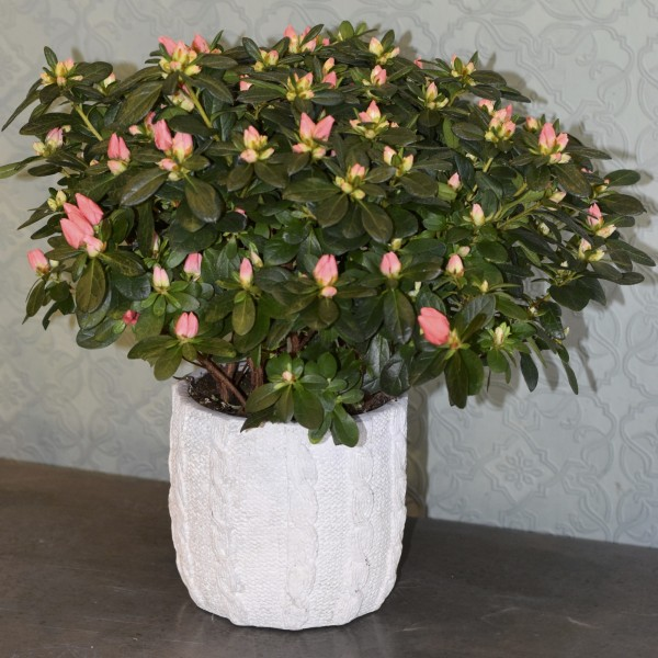 Single Seasonal Plant in Container