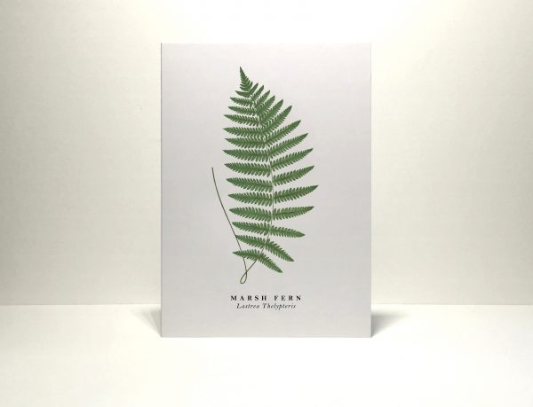 Gift card Marsh fern illustration from Wildfolk Prints available to buy from Kensington Flowers