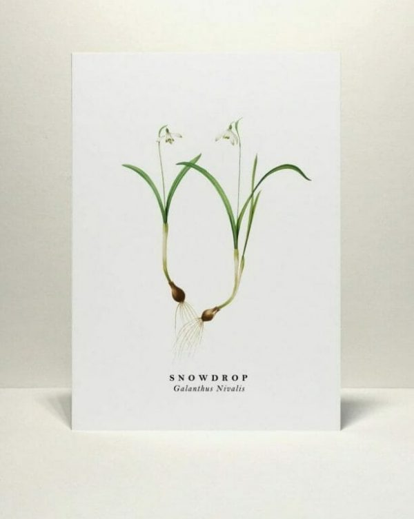 Gift card Snowdrop illustration from Wildfolk Prints available to buy from Kensington Flowers