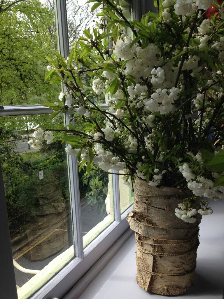 Photo of a large vase filled with white spring blossom branches by a window Kensington flowers