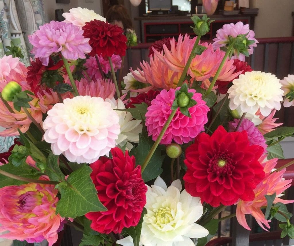 Mixed British grown dahlias