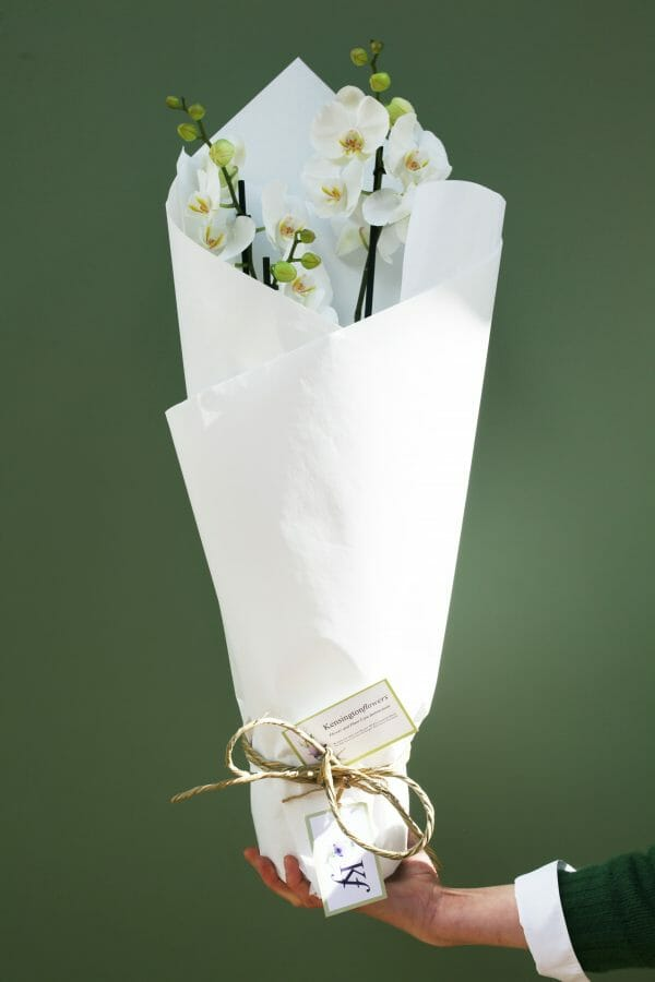 Photo showing a sample of a Wrapped single orchid plant available from Kensington Flowers London