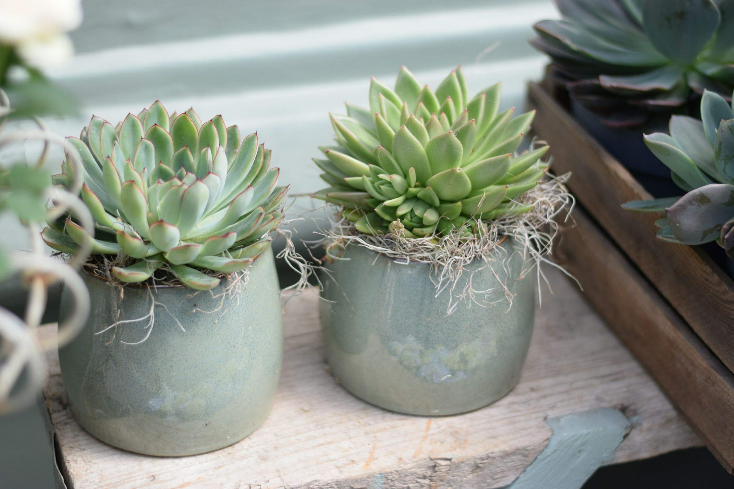 succulents potted plants pots pot cactus houseplant kensington flowers florist london