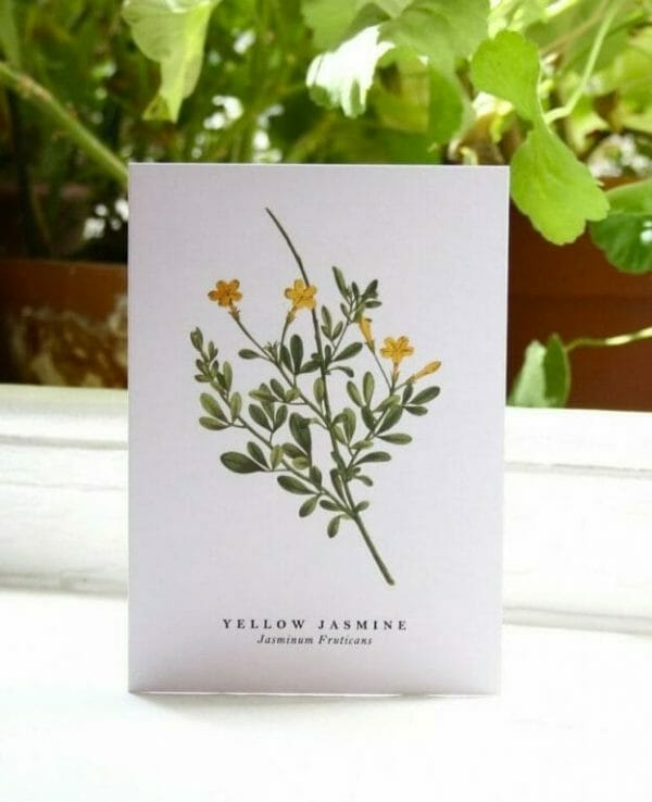 Photo showing an 'Yellow Jasmine' illustrated gift card from Wildfolk Prints available to buy from Kensington Flowers