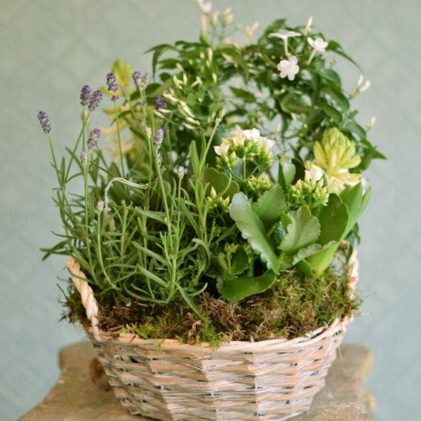 basket-of-flowering-plants-summer.jpg