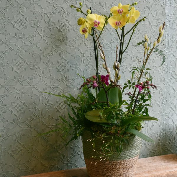 Photo showing a sample of a coloured orchid planted basket available to order from Kensington flowers London